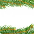 Fresh green fir twigs isolated on white background — Stock Photo