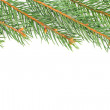 Green fir tree branches isolated on white background — Stock Photo