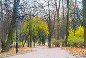 Road through the autumn park — Stock Photo