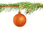 Christmas bauble on a pine tree branch — Stock Photo