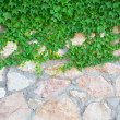 Stock Photo: Stone wall and green plants
