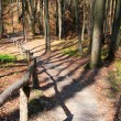 Wooden stairs on a hill in a spring forest — Stock Photo #5005263