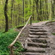 Wooden stairs on a hill in a spring forest — Stock Photo #5005268