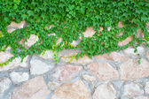 Stone wall and green plants — Stock Photo