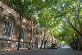 Shady city street with the big trees — Stock Photo