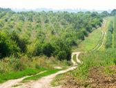 Estrada que cortava os campos e jardins de verão — Fotografia Stock