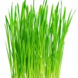 Fresh green grass on a white background — Stock Photo #5269179