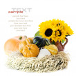 Pumpkins and sunflowers — Stock Photo