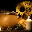 Autumn still life with pumpkins and flowers — Stock Photo