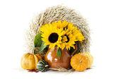 Dynie i słoneczniki — Zdjęcie stockowe