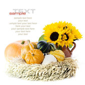 Pumpkins and sunflowers — Stockfoto