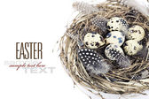 Birds nest with eggs (easter composition) — Foto Stock