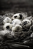 Birds nest with eggs (easter composition) — Stock Photo
