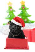 Weihnachten mops vorhanden — Stockfoto