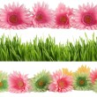 Springtime bloom borders - Stock Photo
