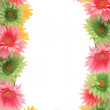 Colorful floral spring border — Stock Photo