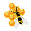 Stock Photo: Wasp and honeycomb