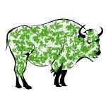 Buffalo — Stock Photo