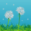 Dandelions — Stock Photo #4652223