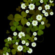 Stock Photo: Clover background