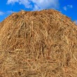 Hay nature — Stock Photo #4454108