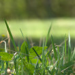 Grass bush glade — Stock Photo #3958861