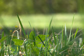 Grass bush glade — Stockfoto