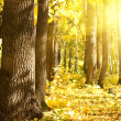 Wood  oak  sun - Stock Photo
