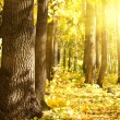 Wood oak sun — Stock Photo #4191936