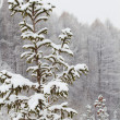 Stock Photo: Tree wood winter