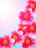 Płatki czerwone kwiaty kwitnienia — Zdjęcie stockowe