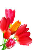 Flowers tulips flowering blossoming bouquet — Stockfoto