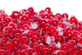 Berries currant frozen — Stock Photo