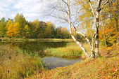 Golden autumn — Stock Photo