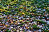 Första rimfrost — Stockfoto