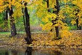 Golden autumn in the park — Stock Photo