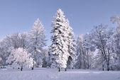 Zmierzch w lesie zimą — Zdjęcie stockowe