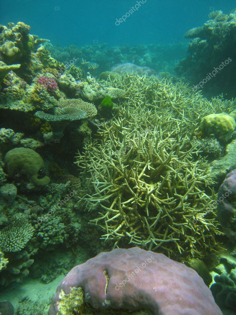 Underwater Scene of Great Barrier Reef in Queensland, Australia — Stock Photo #4004490