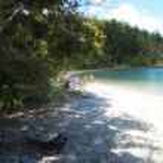 Whitsundays Vegetation — Stock Photo #5190288