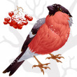 Vector bullfinch and ashberry - Stock Vector