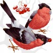 Bullfinch and ashberry — Stock Vector