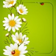 Camomile frame — Stock Vector