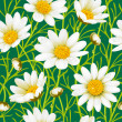 Royalty-Free Stock Vector Image: Flowers Camomile seamless background