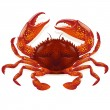 Crab vector - Imagens vectoriais em stock