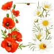Royalty-Free Stock Vector Image: Poppy and Camomile design elements