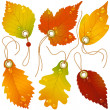 Autumnal discount. Vector fall leaves - Imagen vectorial