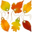 Autumnal discount. Vector fall leaves — Stock Vector