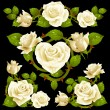 Stock Vector: White Rose design elements