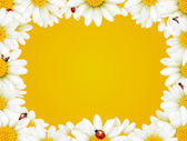 Flowers Camomile frame — Stock Vector