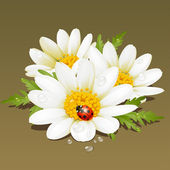 Camomile floral ornament. Flowers fresh background. — Stock Vector